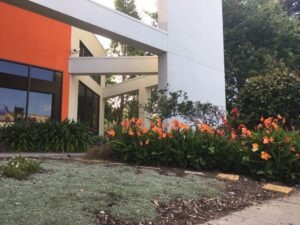 Dimond Library garden